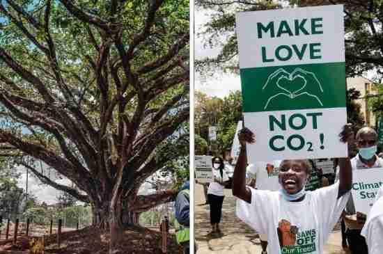 kenya climate activists save tree