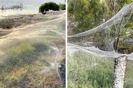 australia spider webs flood thumbnail