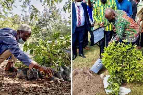 ghana 5 million trees deforestation green ghana day thumbnail