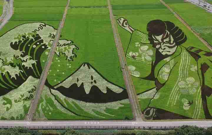 japan rice paddy artwork gyoda