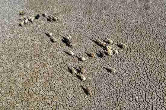 lake pozzillo italy drought climate change