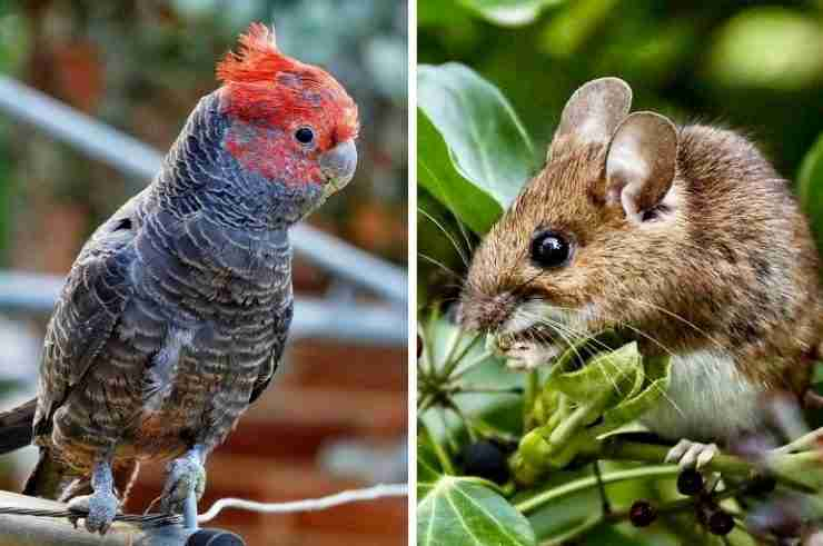 animals shape shifting climate change