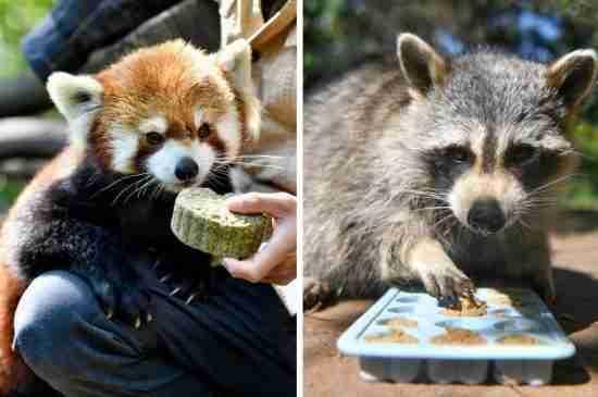 yunnan safari park moon cakes animals